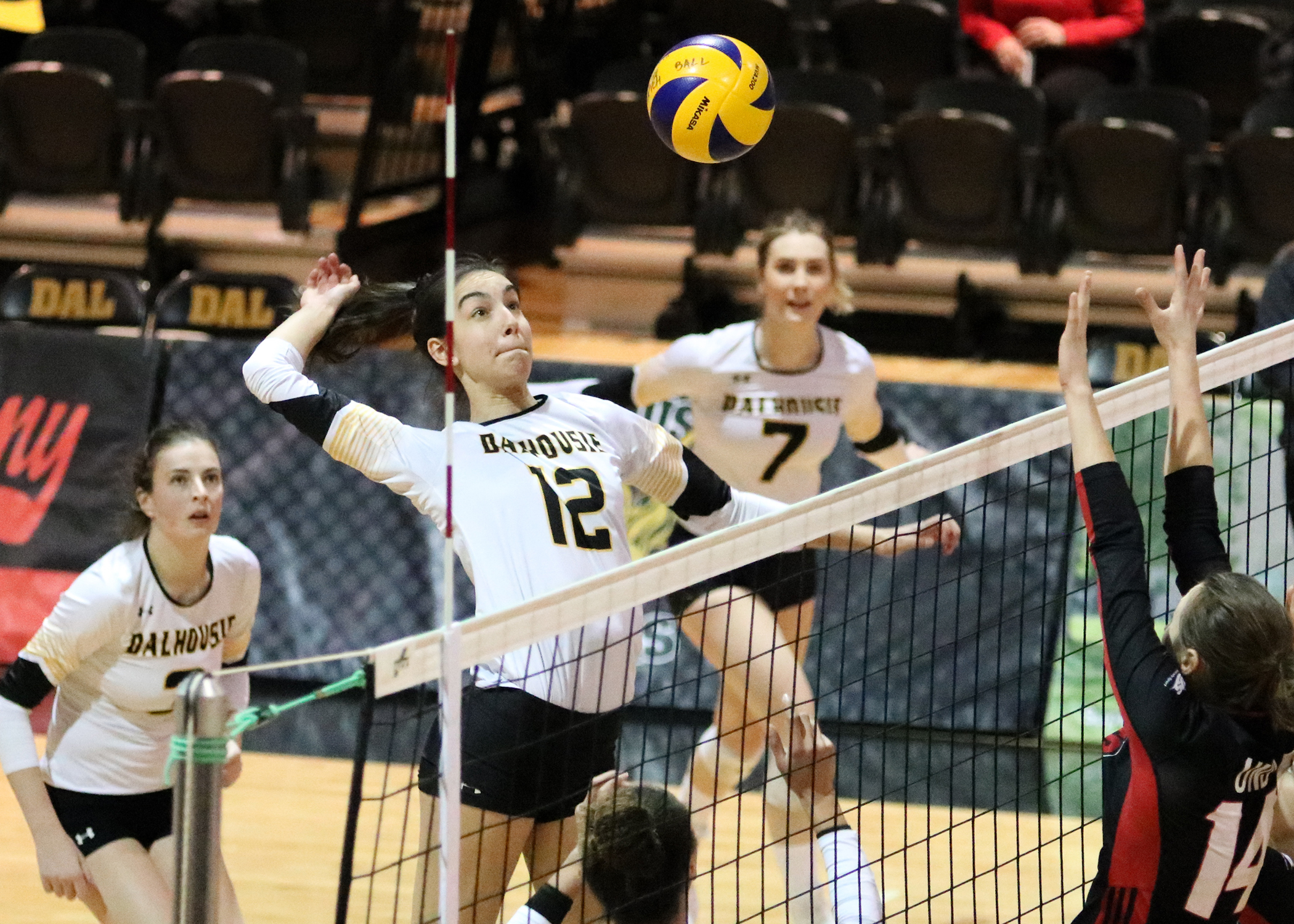 DAL_WVB_2019-20_(Arsenault2).jpg (2.16 MB)